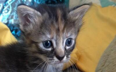 Nový hit internetu, vždy smutné mačiatko konkuruje Grumpy Cat!