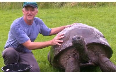 O 186letém nejstarším samci želvy se zjistilo, že je ve skutečnosti homosexuál. Celých 26 let prožil s partnerem stejného pohlaví