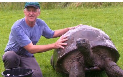 O 186-ročnom najstaršom samcovi korytnačky sa zistilo, že je v skutočnosti homosexuál. Celých 26 rokov prežil s partnerom rovnakého pohlavia