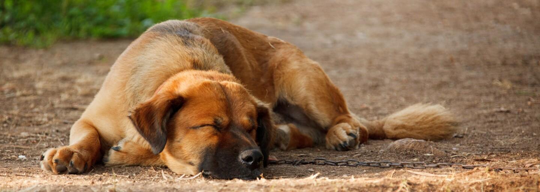 O čom snívajú naši psí miláčikovia? Odpoveď je ako z animáku, spánok im spríjemňujú kosti, hračky a dokonca aj my