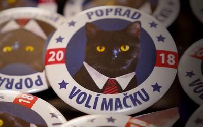 O post primátorky Popradu zabojuje aj čierna mačka