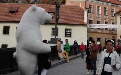 Obří medvědí maskot se přesunul z Prahy do Českého Krumlova. Za fotky si bere peníze