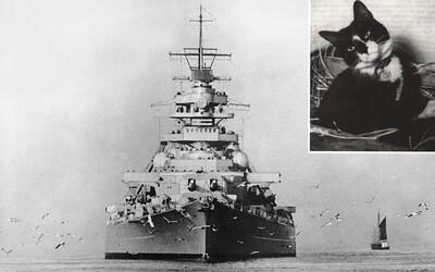 Obyčajný kocúr prežil potopenie troch bojových lodí vrátane Bismarcku. Jeho príbeh udivuje ľudí dodnes