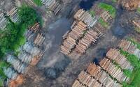 Odlesňování je obrovský problém. Vede k erozi půdy a klimatickým změnám. Jak mu můžeš pomoci zabránit?