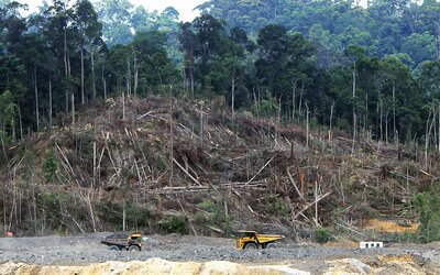 Odlesňovanie Amazonského pralesa vzrástlo za minulý rok až o 20 %