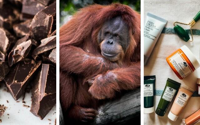 Odvrátená strana biznisu s palmovým olejom: Vypálené pralesy, mŕtve slony či orangutany a tony chemikálii