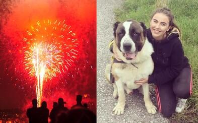 Ohňostroj vydesil ustráchaného psíka natoľko, že zomrel na infarkt