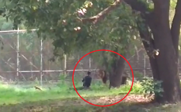 Opitý muž vošiel v zoo do výbehu leva a začal ho dráždiť. Ten sa nenechal a po niekoľkých sekundách na neho skočil