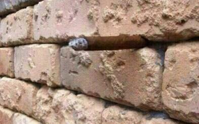 Optická ilúzia v stene, ktorá motá hlavy ľuďom na internete. Čo sa nachádza medzi tehlami?