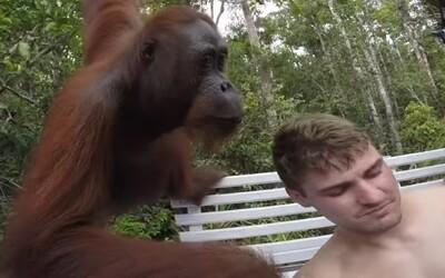 Orangutan mu pri fotení selfie strelil poriadnu facku. Indonézske dobrodružstvo si Hahn navždy zapamätá