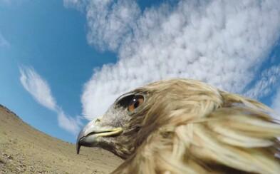 Orol ulovil líšku bez jediného zaváhania. Video z jeho pohľadu ukazuje dominanciu a majestátnosť zvieraťa