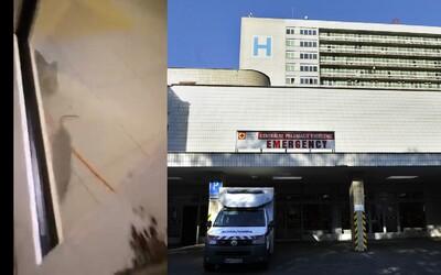 Otrasný stav slovenských zdravotníckych zariadení. Po Ružinovskej nemocnici v Bratislave utekal potkan