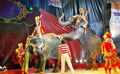 Paříž zakázala klasické cirkusy. Už nechce podporovat týrání zvířat