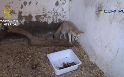 Pašeráci vyvážali chránené zvieratá z EÚ, vrátane Slovenska, do Maroka