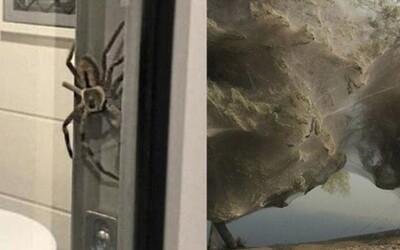 Pavúky si obmotali celý stôl či strom. Fotky z Austrálie dokazujú, že kontinent nie je nič pre arachnofóbov