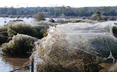 Pavúky v Tasmánii utekajú pred povodňami na vrcholy stromov. Austrálsky ostrov tak vyzerá, akoby ho ovládli pavučiny