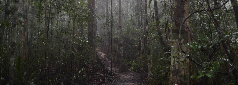 Penanggalan: Zákerný upír z malajzijskej džungle, ktorý si za svoje obete vyberá bezbranných novorodencov