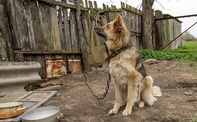Pes nepatrí na reťaz. Ministerstvo sa bude zaoberať petíciou, ktorá chce držanie chlpáčov na reťazi kompletne zakázať