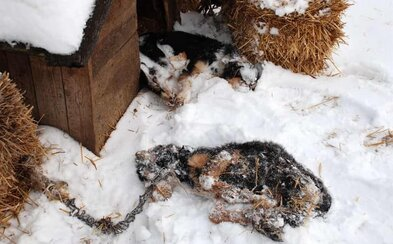 Pes nepatrí na reťaz. Už 37-tisíc ľudí zdieľalo smutné fotky toho, ako dopadnú chlpáči, keď sa o nich v zime nikto nepostará