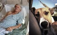 Pes postřelil svého majitele, ten přežil a zastal se ho. Chlupáč je prý dobrým psem a ze zbraně vystřelil omylem