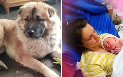 Pes v Británii zabil novorodenca. Bol tak silný, že mu nestačili traja policajti