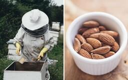 Pěstování mandlí a vysoká spotřeba mandlového mléka zabíjí včely. Za minulou zimu jich jen v USA uhynulo až 50 miliard