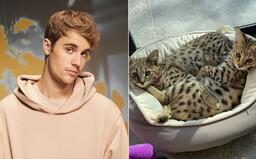 PETA kritizuje Justina Biebera kvôli kúpe mačiek za 35-tisíc. Riešte skutočné problémy, odkazuje spevák
