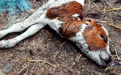 PETA tě chce krvavým videem přesvědčit, aby ses stal veganem. Mrtvými zvířaty odrazuje od konzumace masa