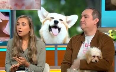 """PETA tvrdí, že slovo mazlíček je povýšené. Domácím zvířatům by lidé měli raději říkat """"společníci"""""""