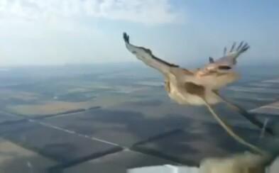 Pilot ruského Boeingu nakrútil, ako do skla v kabíne narazil vták. Lietadlo bezpečne pristálo