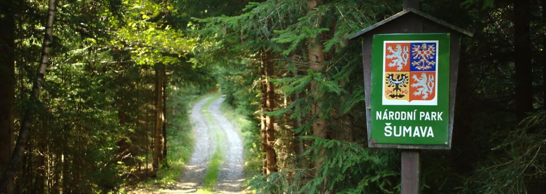 Po dlouhých 150 letech se na Šumavě vytvořila vlčí smečka. Podívej se na tři mláďata, která zachytila fotopast