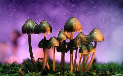 Po marihuane aj magické huby. Kalifornia má možnosť dekriminalizovať jednu z najtvrdších drog