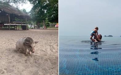 Po plážach ostrova Ko Samui pobehujú roztomilé prasiatka. Čo všetko môžeš zažiť počas luxusnej dovolenky v Thajsku?