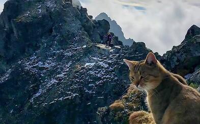 Po tatranských Rysoch pobehuje roztomilá mačka domáca, do ktorej sa turisti zamilovali. Nechápu, ako sa vyšplhala tak vysoko