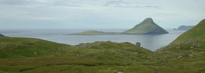 Po veľrybách vyzabíjali na Faerských ostrovoch aj takmer 200 delfínov. Miestne tradície nemajú pri zvieratách zľutovanie