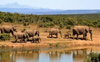 Počet zvířat i rostlin klesá, do 80 let může v Africe vyhynout až polovina ptáků a savců. Na vině je masivní pytláctví