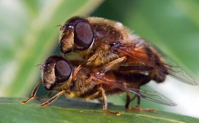 Počty hmyzu ve světě se dramaticky snižují. Až o 45 %