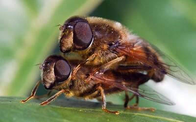 Počty hmyzu vo svete sa dramaticky znižujú. Až o 45 %