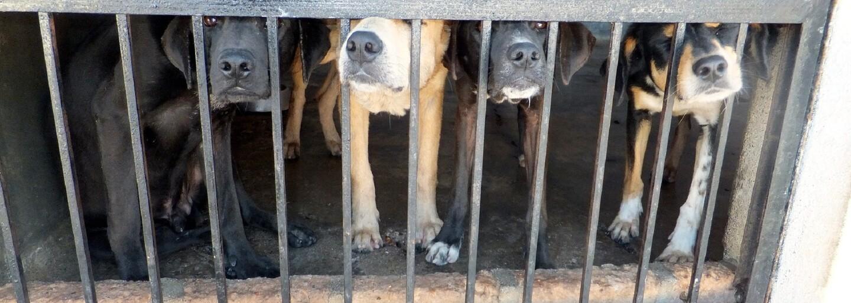 Podařilo se zachránit 170 psů, kteří by jinak skončili v polívce. Zvířata z jihokorejské farmy dostanou šanci na normální život