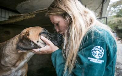 Podarilo sa zachrániť 170 psov, ktoré by inak skončili v polievke. Zvieratá z juhokórejskej farmy dostanú šancu na normálny život