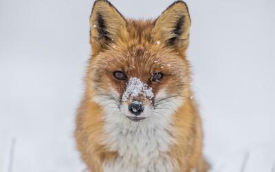 Podívej se na nejlepší fotky z Czech Nature Photo. Vyhlašování čtvrtého ročníku muselo proběhnout online