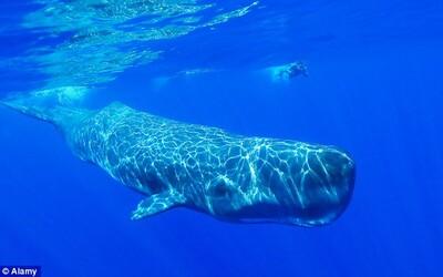 Pohľad na spiace veľryby pôsobí ako z iného sveta