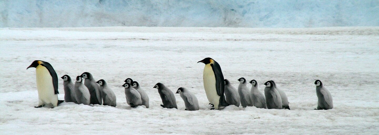 Polárne safari na Antarktíde: Luxusné a mrazivé dobrodružstvo si dovolí len pár ľudí, stojí 80-tisíc eur