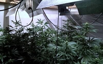 Policajti šli odprevadiť opitú dôchodkyňu domov, našli jej na povale marihuanovú farmu