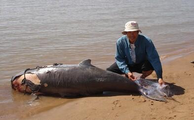 Policajti zabili štyroch pytliakov, ktorí kruto vraždili delfíny a tigre