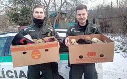 Policajti zachránili jedenásť šteniatok, ktoré mrzli v osade na východe Slovenska. Teraz hľadajú nový domov