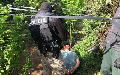 Polícia chytila pestovateľa marihuany. Jeho záhrada bola plná ilegálnej drogy