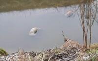Polícia našla v Seneckom okrese mŕtve telá mačky a psov, utopili sa