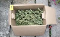 Policie našla u muže z Přerovska 5,5 kila marihuany. Hrozí mu až deset let natvrdo