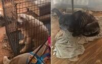 Policie našla v hrozivých podmínkách 3 děti a 246 různých zvířat. V bytě žil muž s manželkou a přítelkyní, která se chtěla zabít